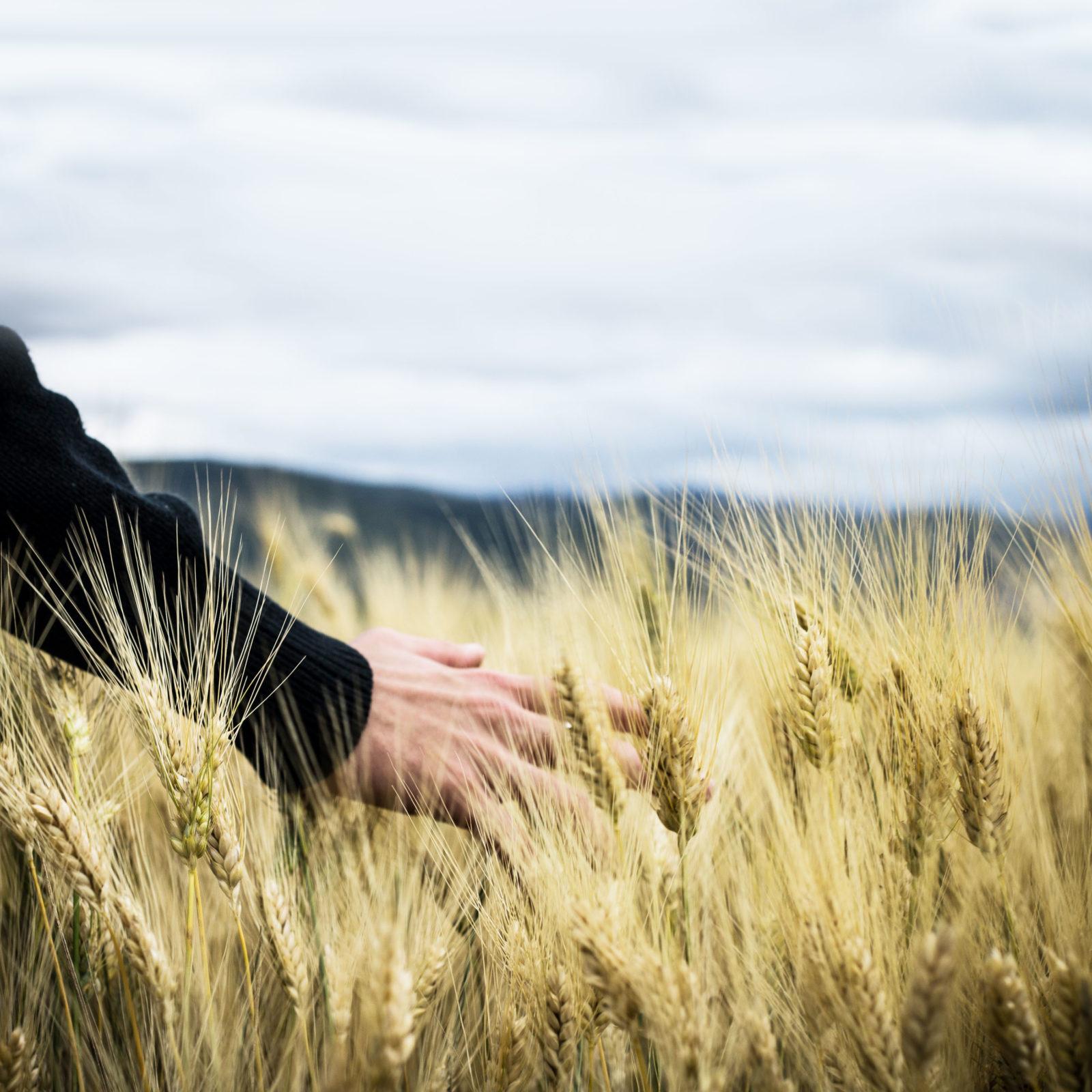 paysage dans les champs vaud plus